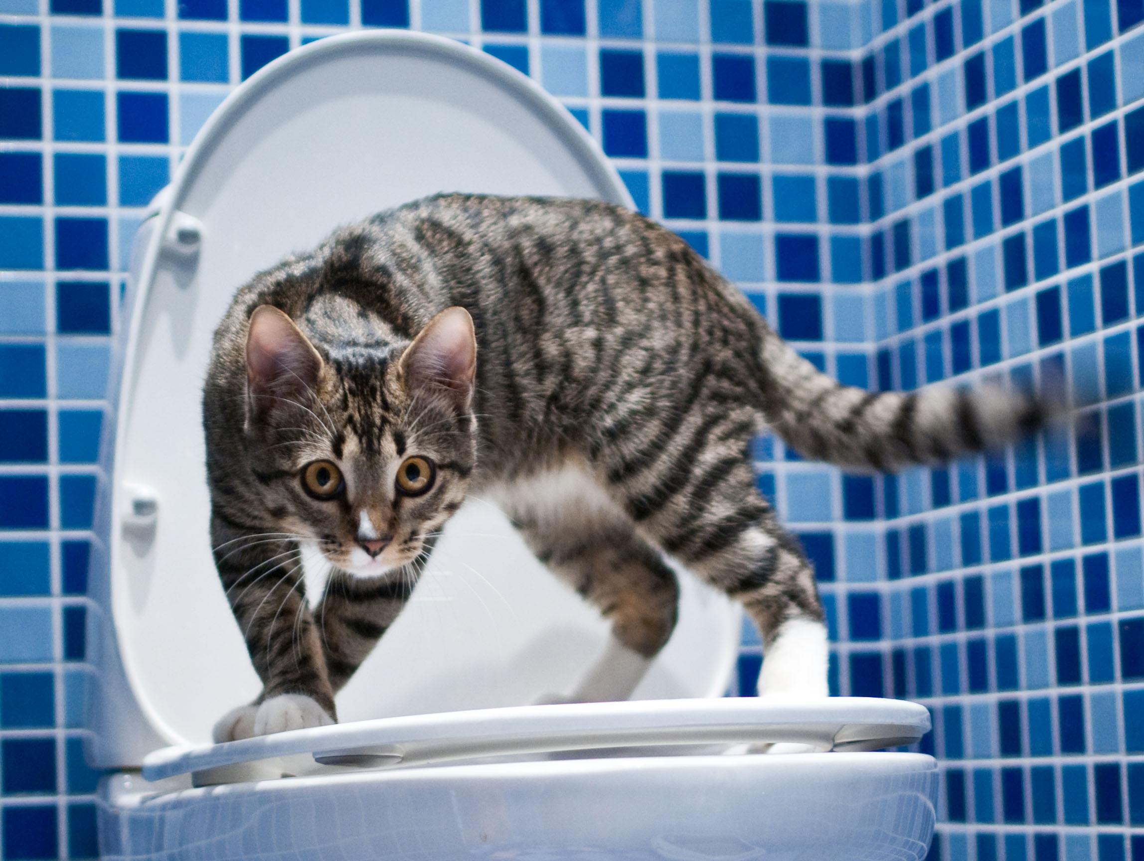 Запор у кота - что делать в домашних условиях - Ветеринар Гид 40